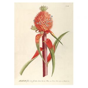 the-dybdahl-plant-print-in-lijst-eiken-hout-ananas-red-plantae-print-3701